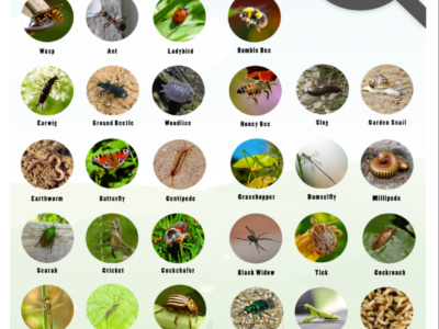Minibeast Identification Sheets