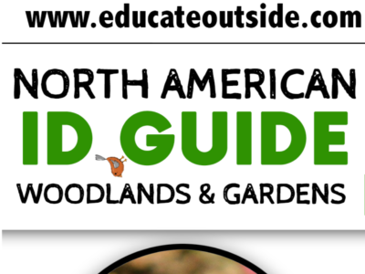 North American Birds ID Guide