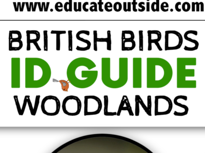 British Woodlands Bird ID Guide