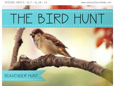 The Bird Hunt