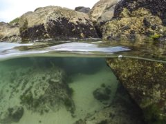 British Rock Pool ID Guide