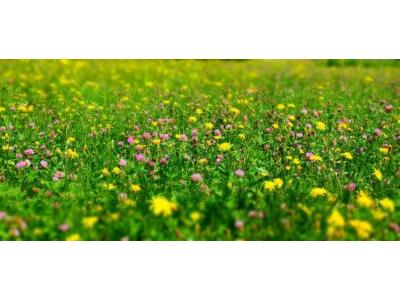Grass Gone Wild