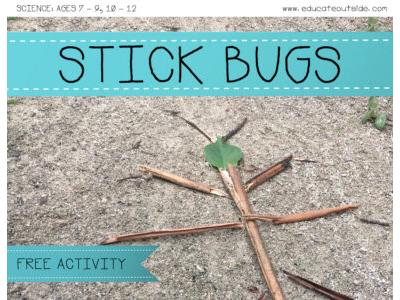 Symmetry: Stick Bugs