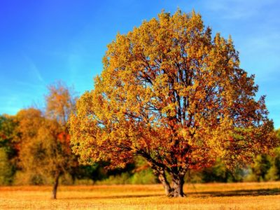 British Tree Identification Guide