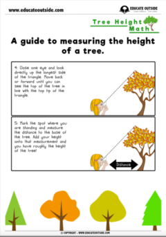 Measurement: Tree Height