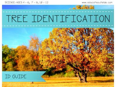British Tree Identification Guide